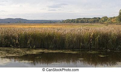 Floodplain in autumn - Floodplain of Sula river in autumn....