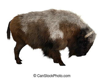 American Bison - 3D digital render of an American bison...