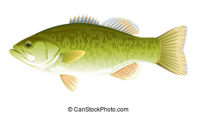 Fish Largemouth Bass - Big realistic freshwater fish...