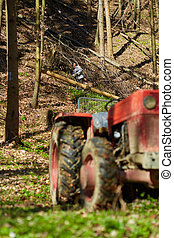 Woodcutters using a logging tractor with winch