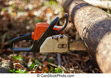 Chainsaw stuck into a tree - Chainsaw plunged into a tree,...