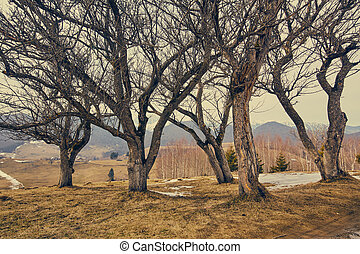 Group of hornbeam trees - Landscape with a group of hornbeam...