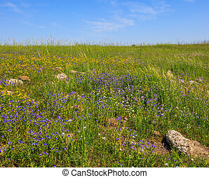 The blossoming Golan heights - Flat hills are covered with a...