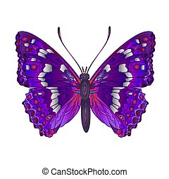 Butterfly Apatura iris forest butterfly vector illustration