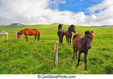 Well-groomed horses a meadow near the farm - Well-groomed...