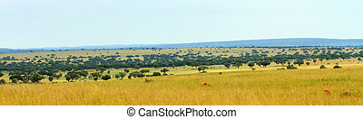 Uganda Savannah Panorama