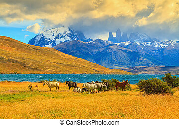 Magic light - Rocks Torres del Paine visible among the...