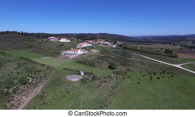 Aerial from a cows in Portugal