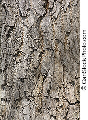 Tree Bark Texture Background Pattern