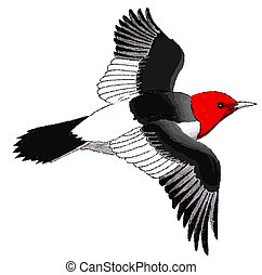 Red-headed Woodpecker Melanerpes erythrocephalus Ink and...