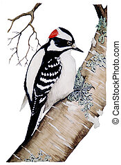 Downy Woodpecker - male Picoides pubescens Watercolor