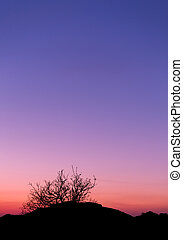 Beautiful landscape image with trees silhouette at sunset in spr