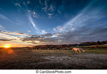 Into the Sunset - Horse walking into a magnificient sunset
