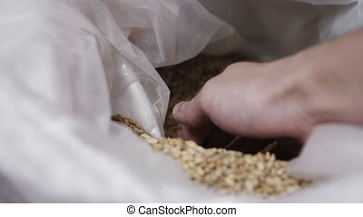 man takes the grain in hands close up