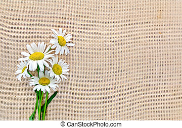 Camomile on sacking - Bouquet of white daisies on a...