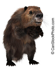 Beaver - 3D digital render of a cute beaver isolated on...