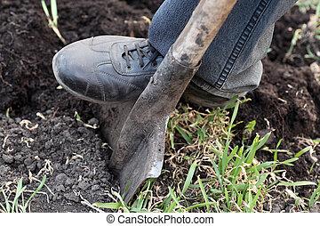 園丁, 花園, 黑桃, 挖掘