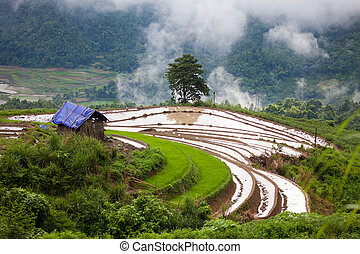 Sapa - Landscape with terraces for growing rice, Sapa,...