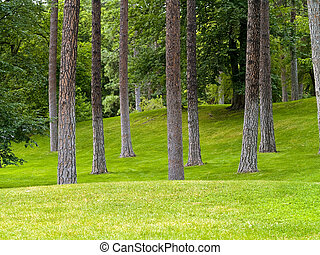 Grassy Park and Trees - Grassy hills in a tree filled park