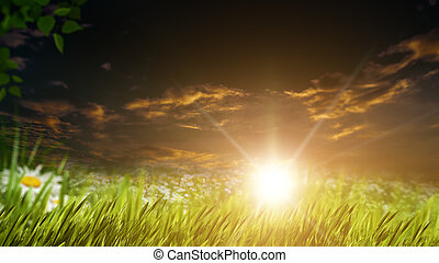 Beauty evening on the summer meadow, natural backgrounds