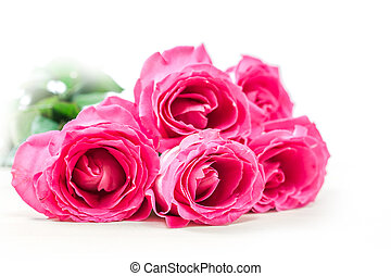 Pink roses - Bouquet of pink roses on white background