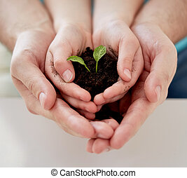 close up of father and girl hands holding sprout - people,...