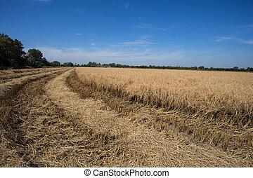 farmer harvesting rice in paddy field