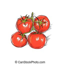 red tomato sketch draw isolated over