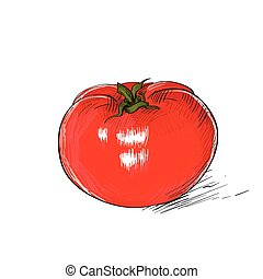 red tomato sketch draw isolated over white