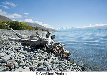 Old log Lake Pukaki, South Island - Old washed up log...