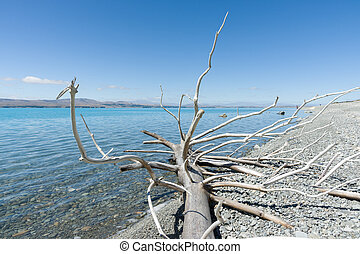Dead tree on Lake Pukaki - Dead tree, dried and bleached in...