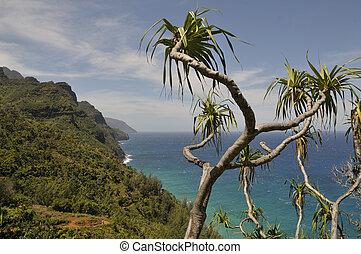 Kalalau trail in Kauai, Hawaii - Kalalau hiking trail the...