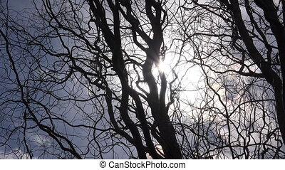 Tree Dry Dead Branches Background Against Sun Rays