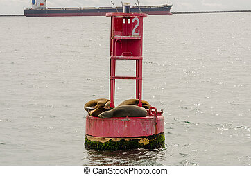Sea Lions Cuddle on a Buoy in the Long Beach Harbor