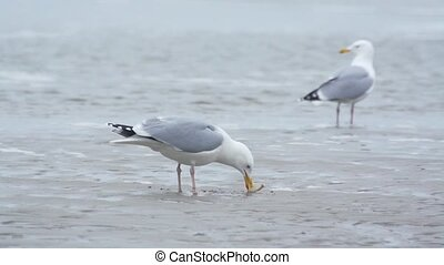 sea gull on the beach