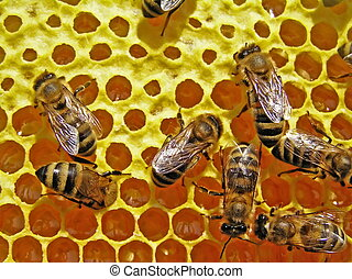 Bees and sunflower honey - The yellow and original smell has...