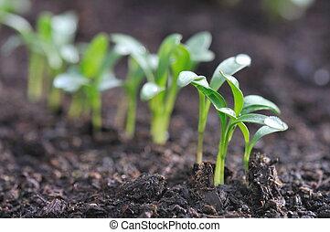 seedlings - drops on greenery  seedlings in soil