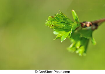 verdant nature - closeup of a bud in verdant leaves in...