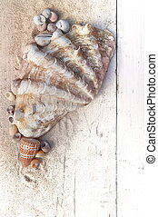 giant clam and seashells - giant clam with other little...