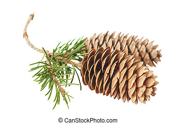 Fir cones - Two fir cones on a branch isolated on white...