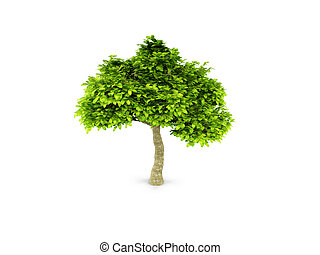 lone green tree isolated on white - isolated green tree...