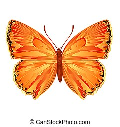Butterfly Lycaena virgaureae meadow butterfly vector...