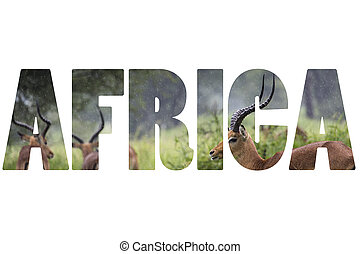 Word AFRICA over wild animals.