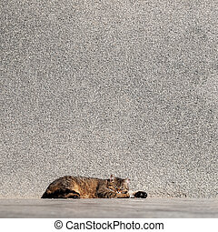 Tabby cat laying on a sun