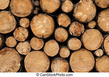 Stacked tree trunks - Close up of tree trunks with different...