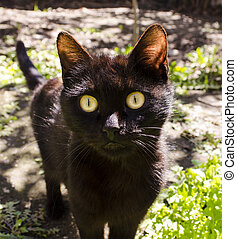Black kitten with wondering eyes - Black kitten with big...