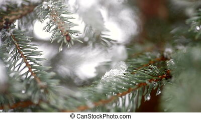 Beautiful fir-tree in snow in winter and falling snow