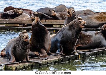 pacífico, noroeste, mar, leones, y, sellos,