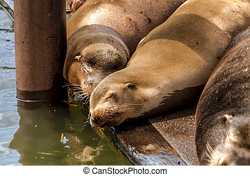 Pacific Northwest Sea Lions and Seals