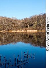 Marthaler Park and Pond Spring Morning - marthaler park and...